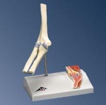 Mini Ellebooggewricht op statief - Anatomische modellen - FeelgoodWinkel.nl